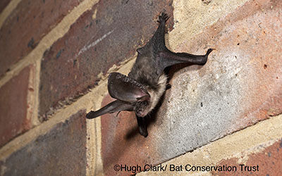 bat_access_at_tudor